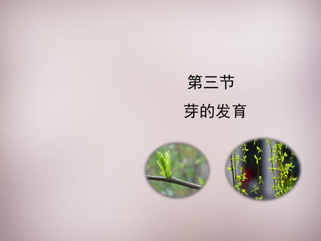 八年級生物上冊 第三單元 第一章 第3節《芽的發育》課件1 (新版)冀教版