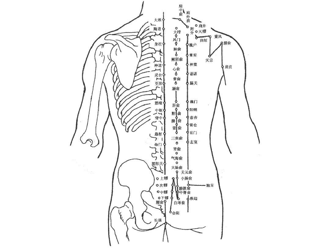 中药学表格针灸穴位挂图养生课件最全人体解剖图人体穴位图解大全