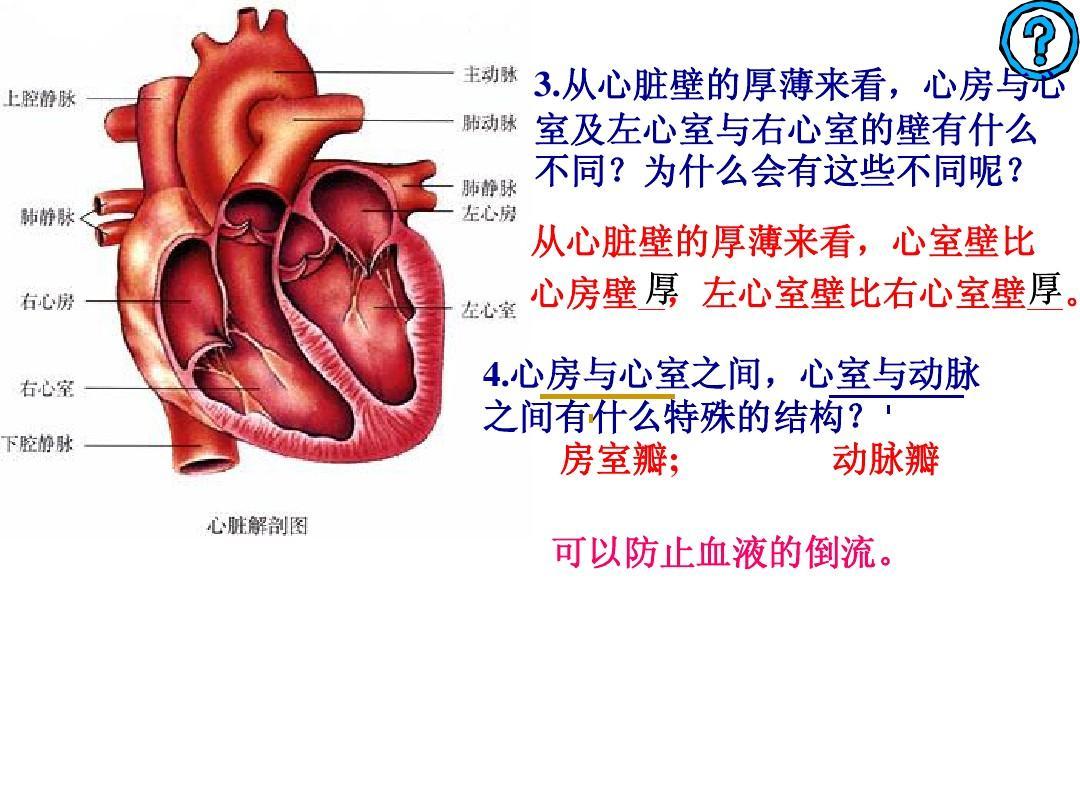 人体结构和功能_人体心脏的心室壁比心房壁厚,这一结构特点与心室的生理功能相适应的