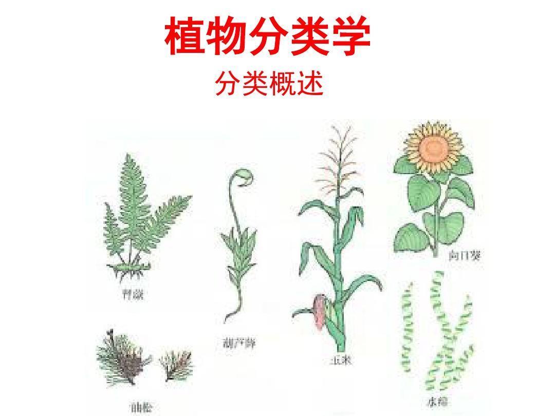 植物分类学—藻类植物(上课版)