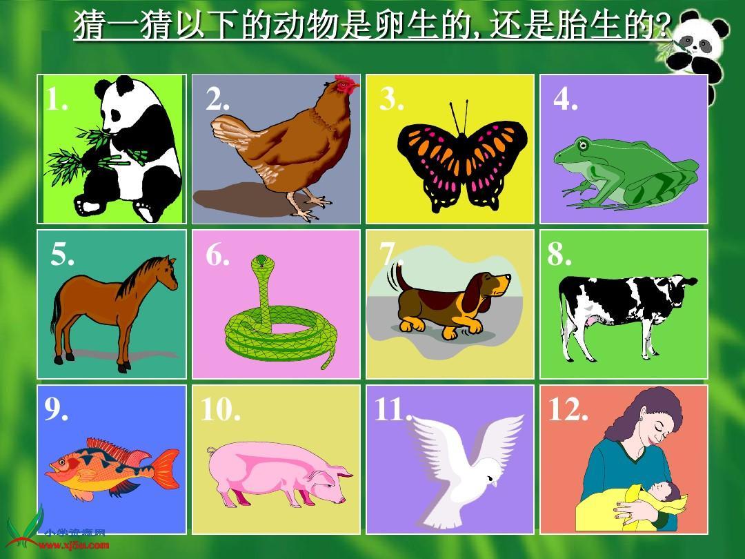 四年级科学下册《第二单元_动物的繁殖活动》ppt课件图片