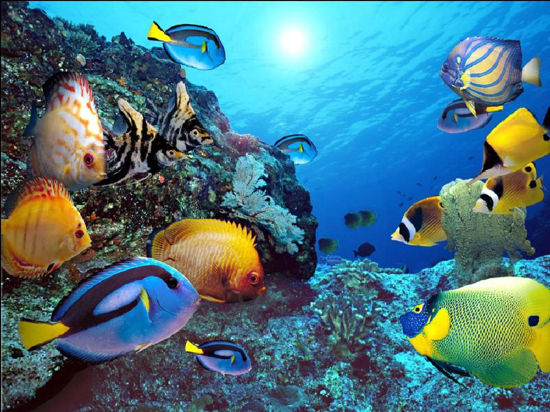 《海底世界》PPT课件(苏教版三年级语文下册课件)