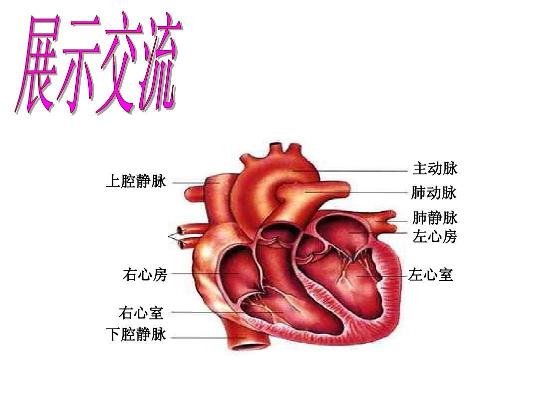 血液循环的途径