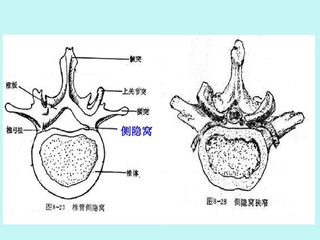 生理解剖学_第21页 (共68页,当前第21页) 你可能喜欢 手部解剖 呼吸系统解剖生理