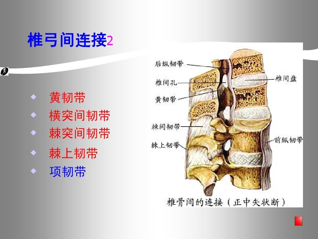 生理解剖学_第30页 (共68页,当前第30页) 你可能喜欢 手部解剖 呼吸系统解剖生理