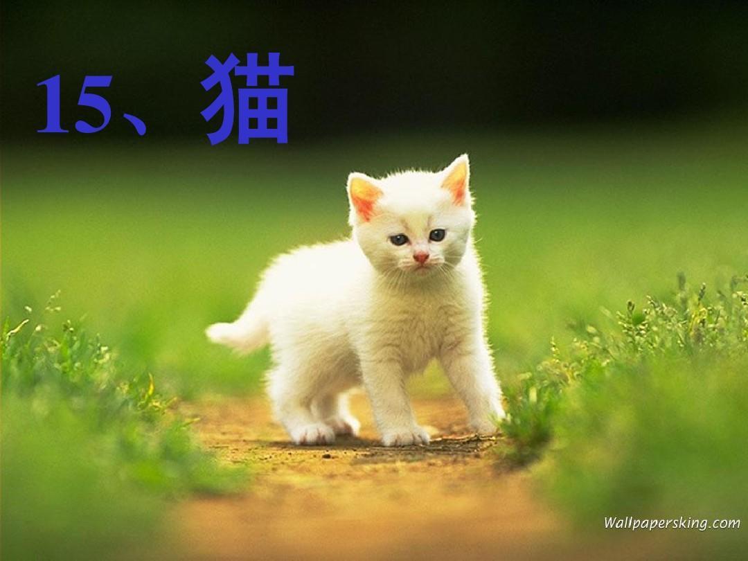 15.《猫》ppt