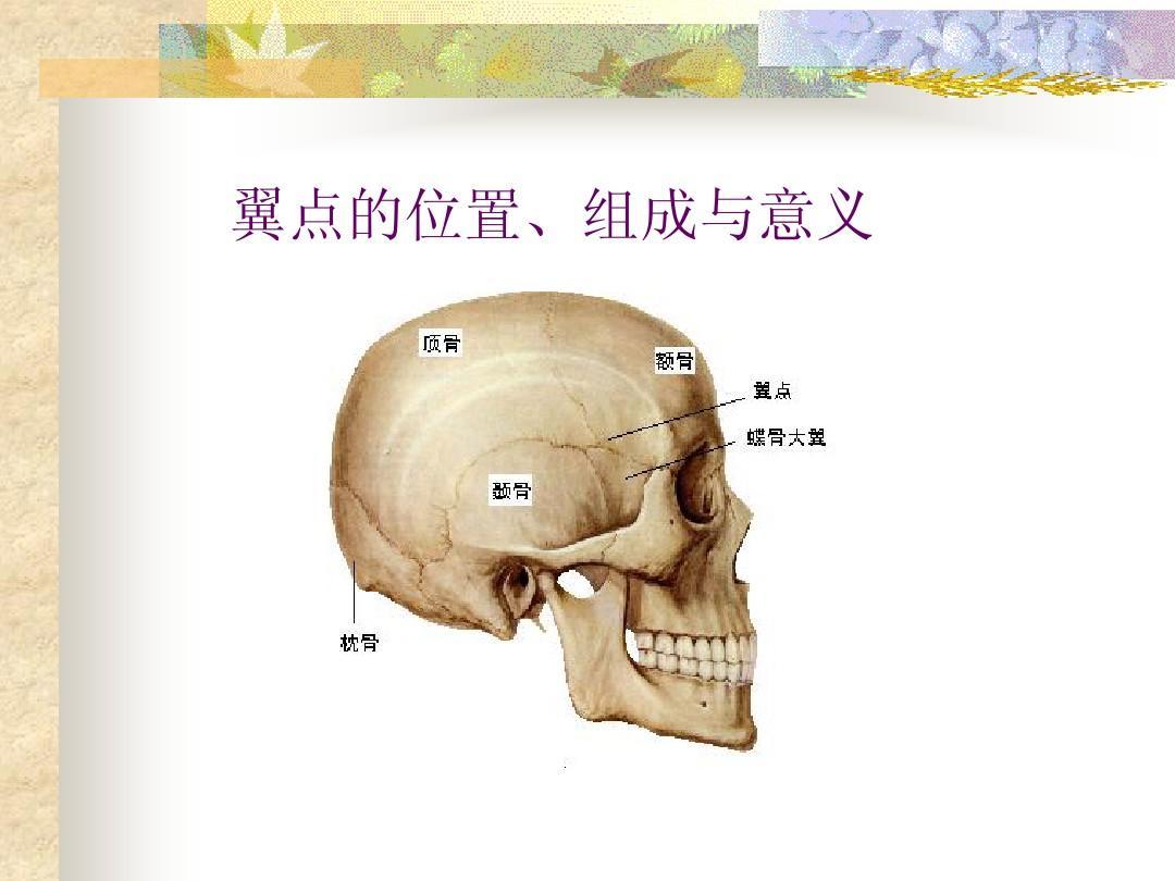 人体解剖学_人体解剖学1ppt
