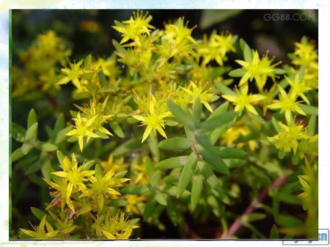 藻类、苔藓和蕨类植物终结版12PPT