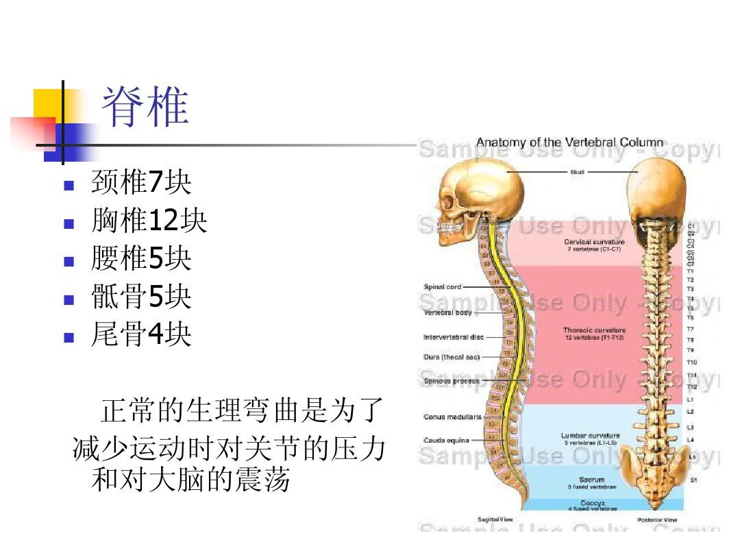 生理解剖学_当前第24页) 你可能喜欢 运动生理学 核心肌群训练 肌肉功能 运动解剖