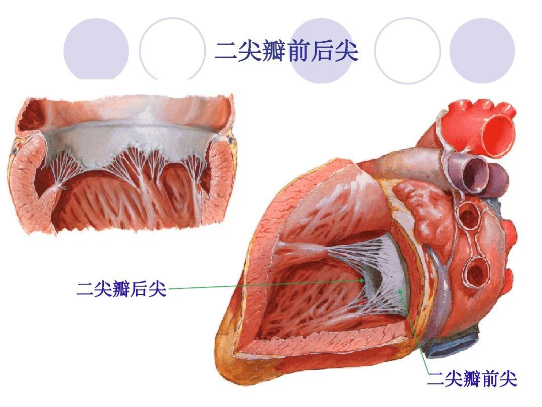 心脏瓣膜病病人的护理ppt