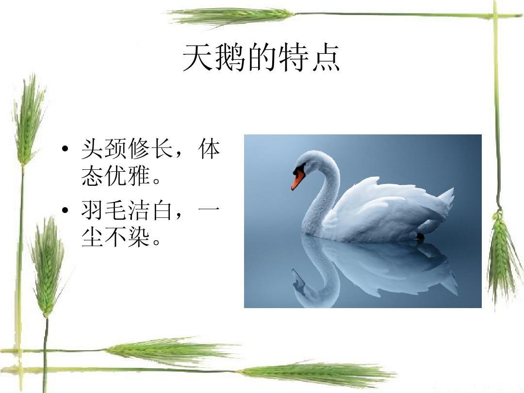 仿生学陶瓷产品设计ppt图片