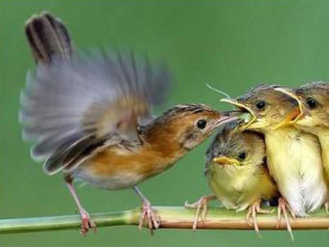 猎人食腐鸟宝宝_鸟妈妈给鸟宝宝讲故事_鸟宝宝