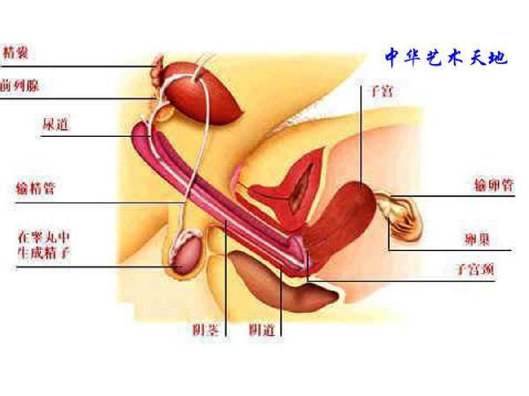 人体结构_人体结构大型医学图谱ppt