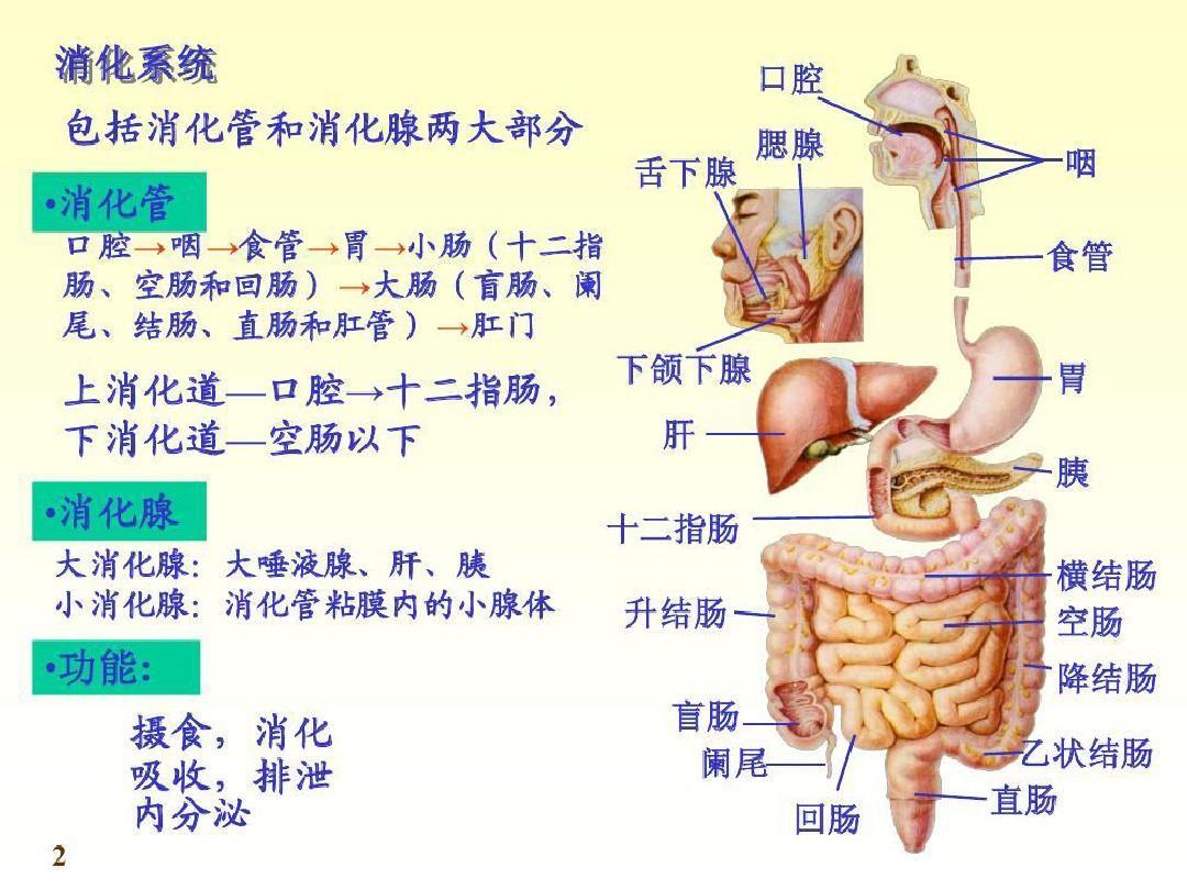 人体系统_人体的结构与系统ppt