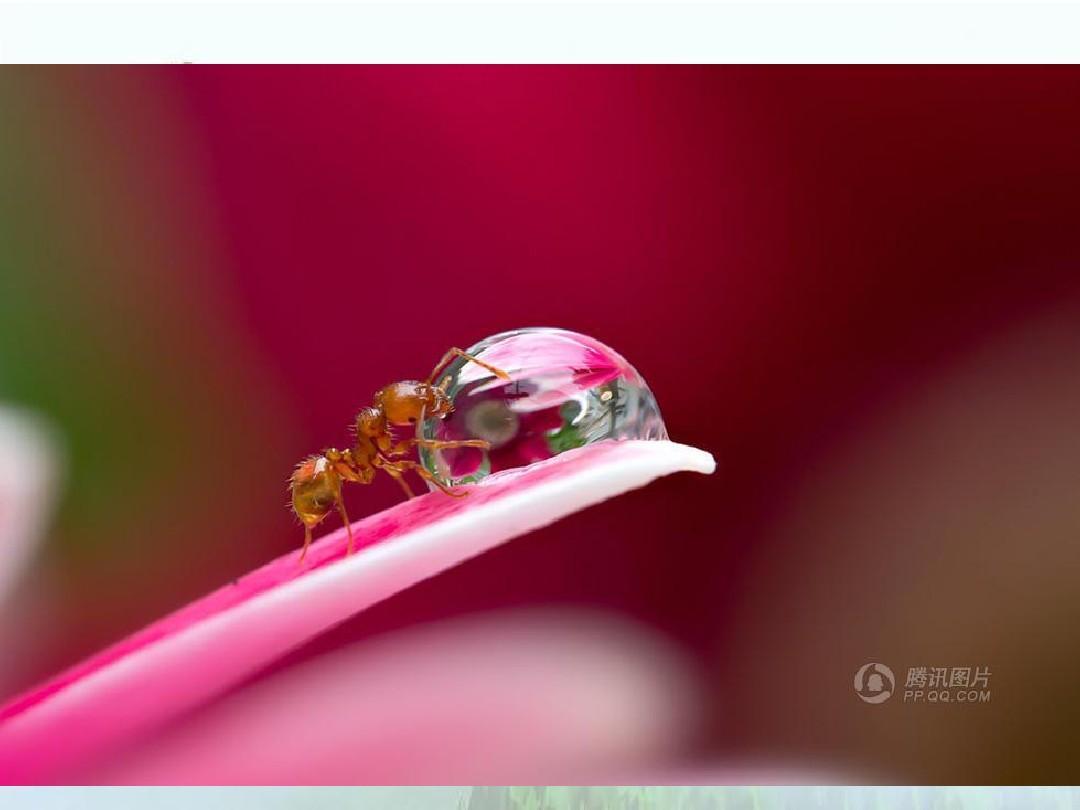 文档网所有分类资格考试/认证ppt猴子动物蚂蚁微距抓拍小模板洛维碧芙园植物什么来的图片