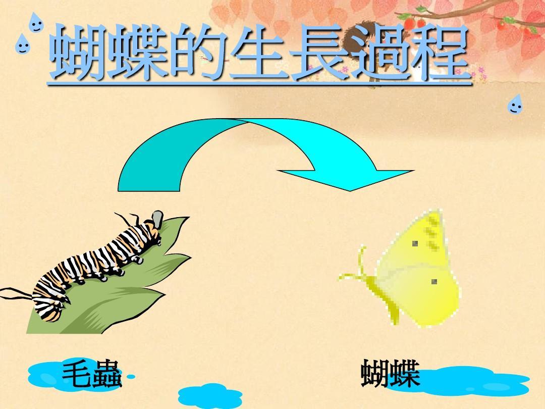 蝴蝶的生长过程