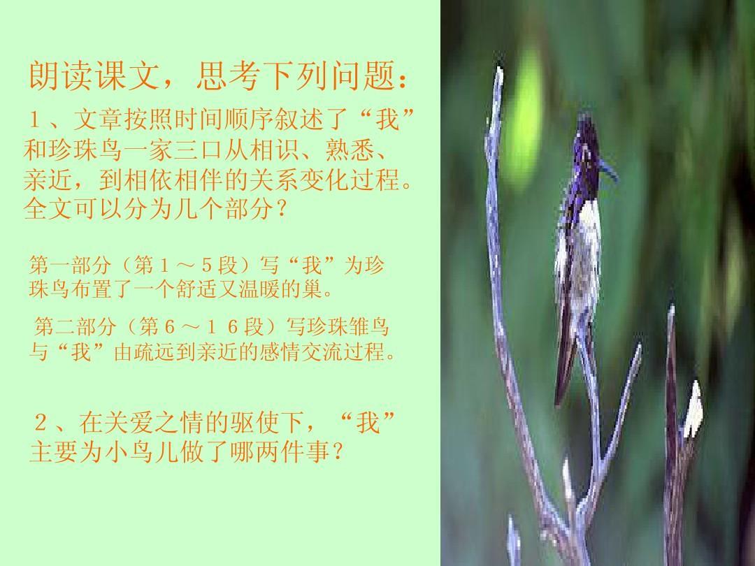 苏教版四上册年级课件《珍珠鸟》告诉课美术ppt湘教版年级二语文请你公开我教学设计图片