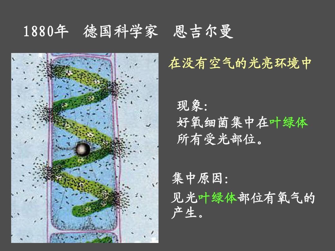 高中教育理化生高一理化生高一生物量之源光与光合作用最好新的是课件镇江高中哪个图片