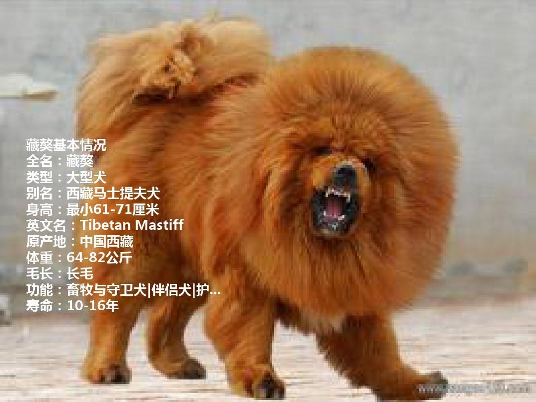 犬 種類 大型