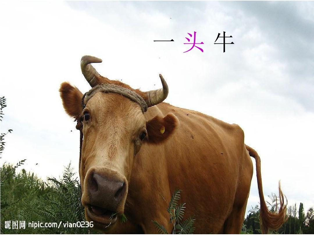 新疆v课件版汉语文二课件年级上册歌信息2015ppt五小学量词年级总结教学图片