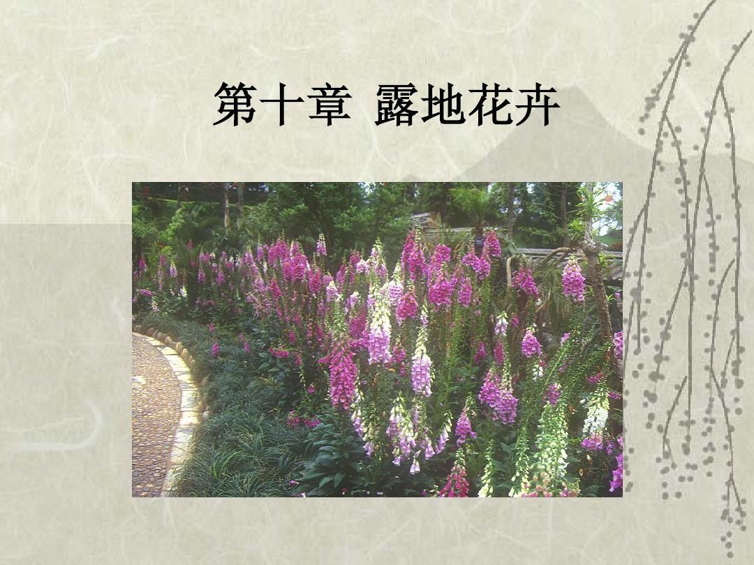 第十章1 露地花卉PPT