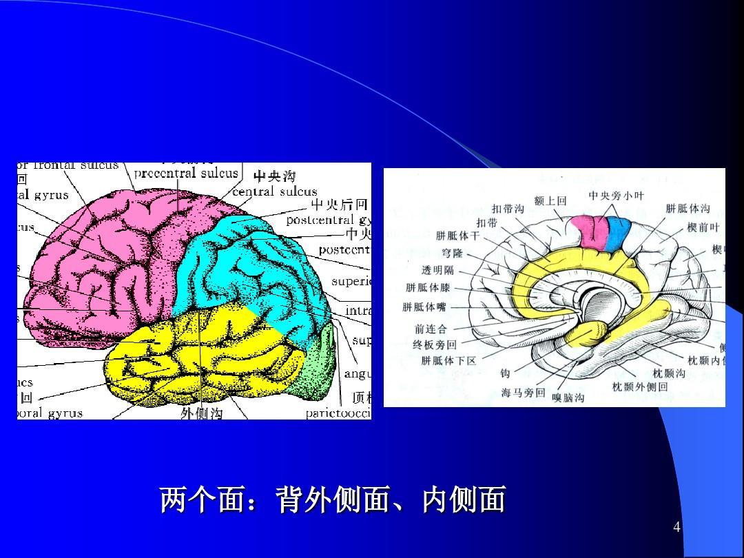 障碍意识幼儿诊断及病损的活动解剖ppt教案消防a障碍定位大脑图片