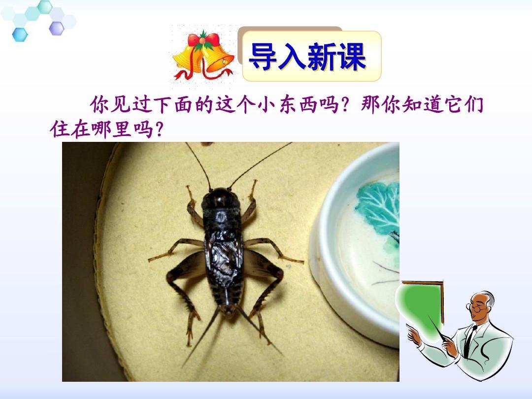 7蟋蟀的住宅ppt