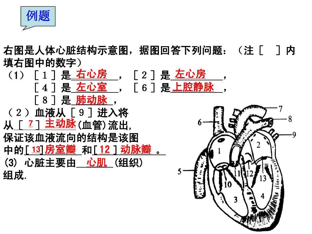 请据图回答下列问题:(1)在人的 血液循环过程中,血液.图片