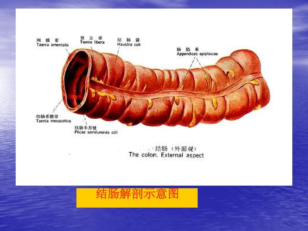 结肠直肠肛管疾病ppt
