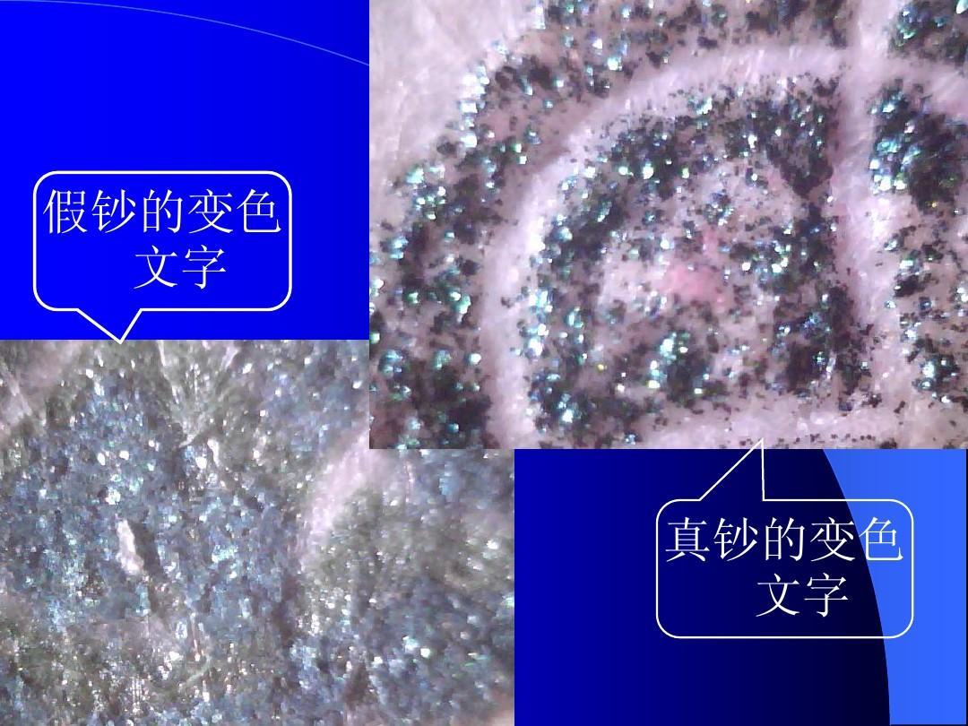 初中生物自制教具ppt图片
