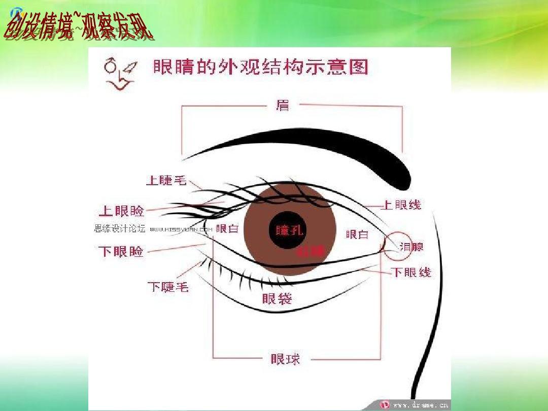 小学美术湘教2001课标版一年级上册《大眼睛》ppt课件图片