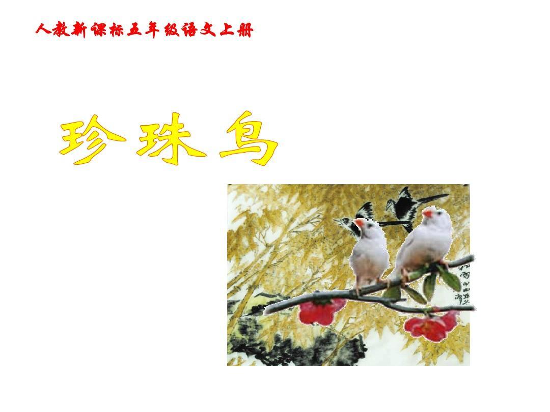 杜鹃版年级五课件语文16珍珠鸟公开课PPT课件圆舞曲上册人教图片