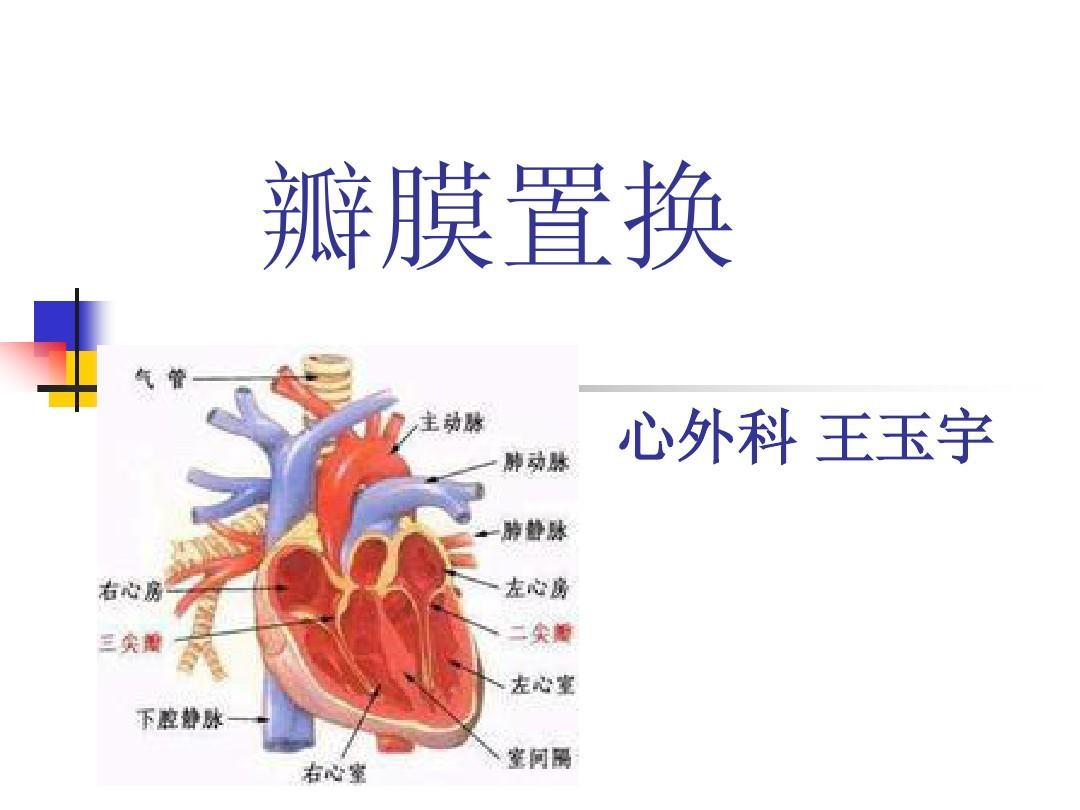 心脏瓣膜病个案2ppt