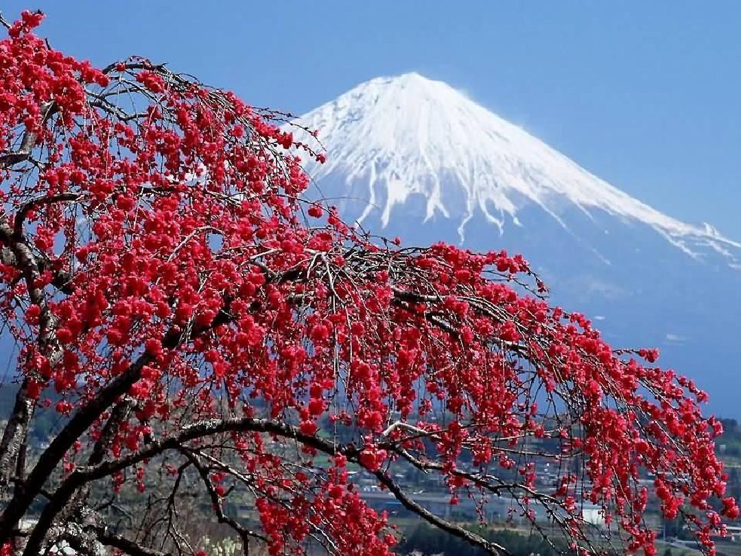 日本旅游地?_日本ppt