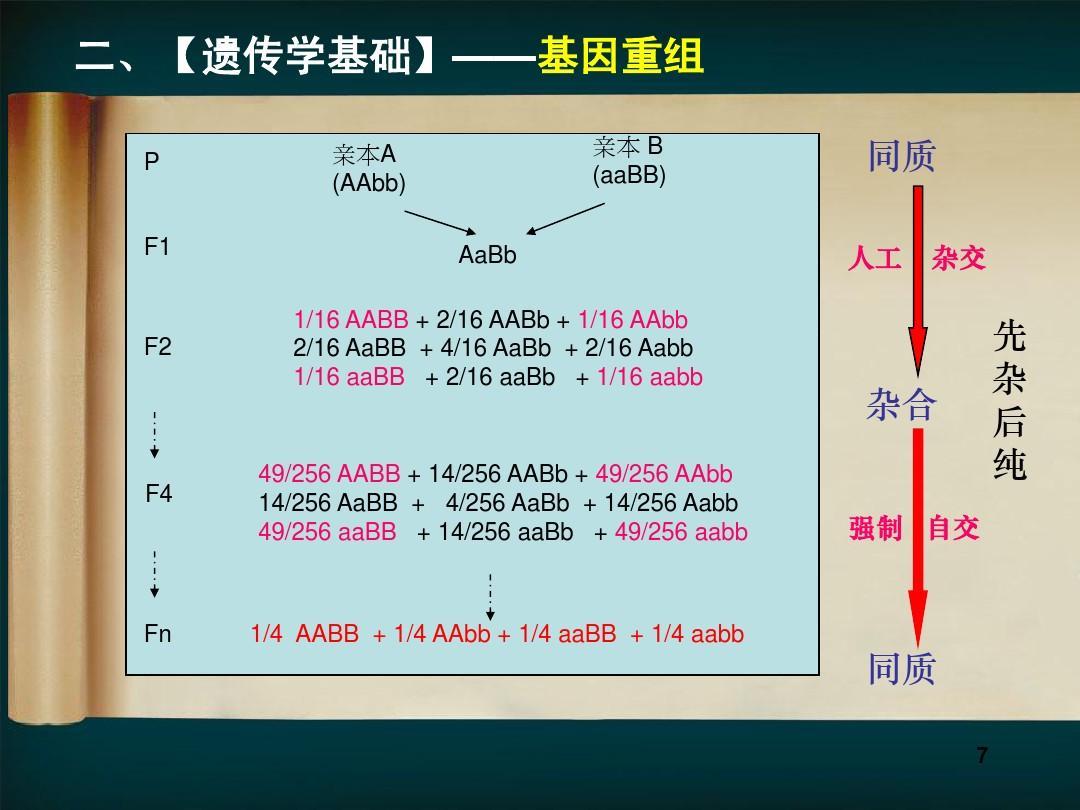 WWW_16AABB_COM_第七讲 常规杂交育种-上ppt