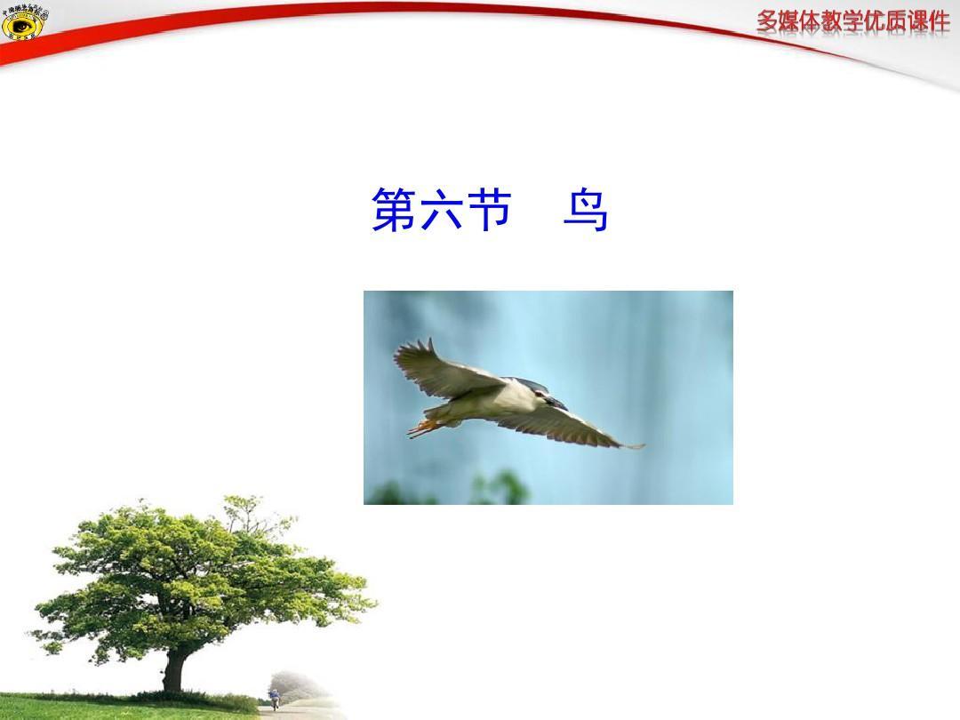 新人教版八年级上册鸟