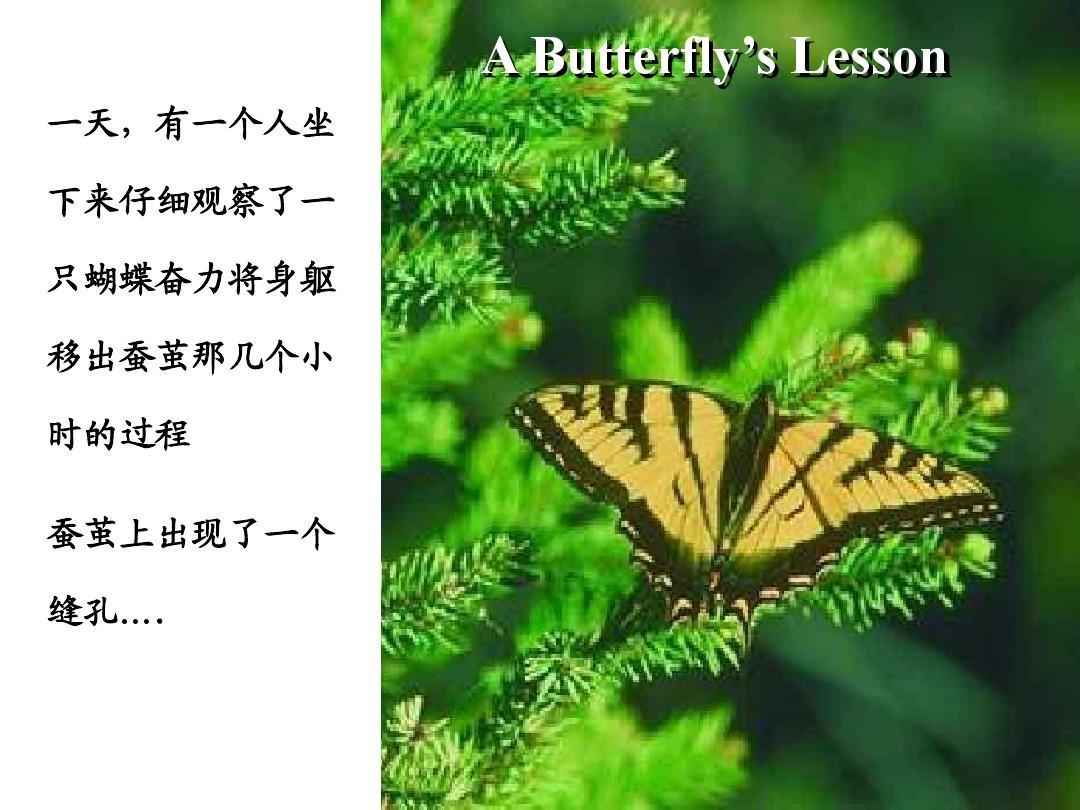 蝴蝶的故事