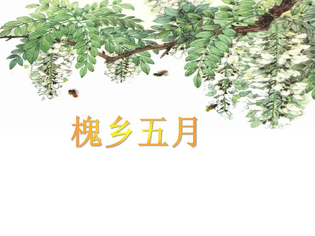 小学语文苏教版三年级下册《槐乡五月》PPT
