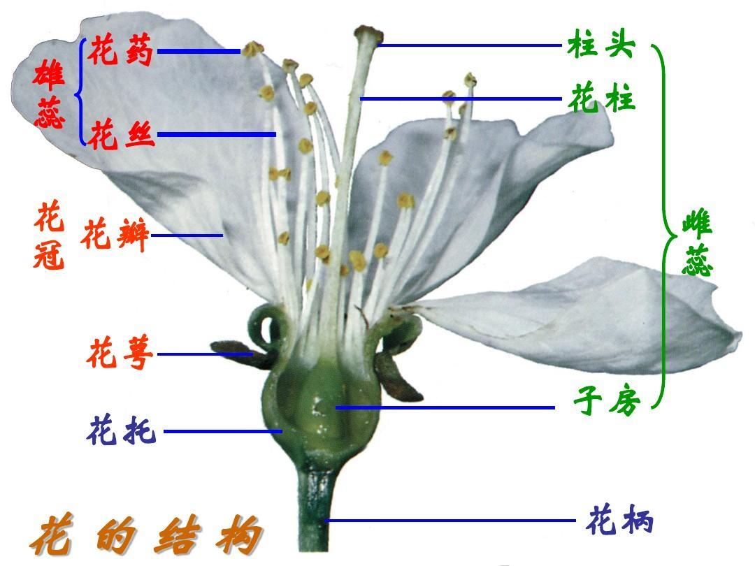 人教版八下第七单元第一章第一节植物的生殖(共46张ppt)