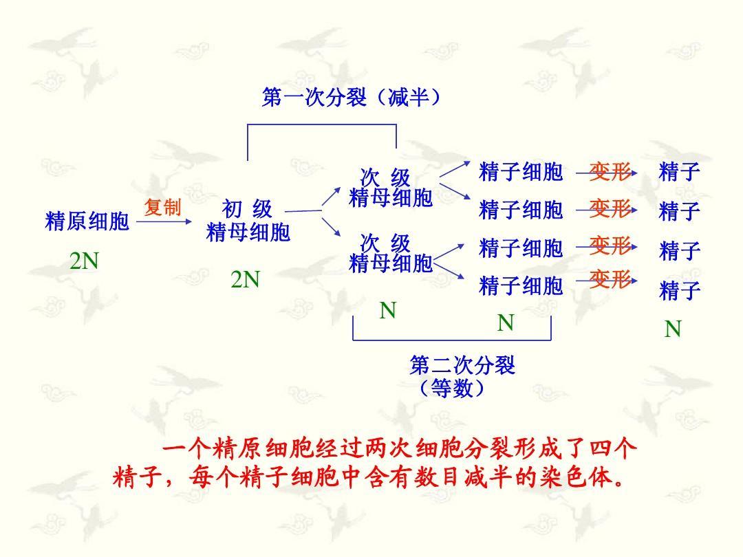 生物形成和有性生殖细胞的分裂(教材v生物2)ppt全物理电子版减数上册解年级八图片
