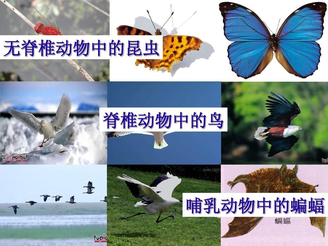 八年级哺乳动物ppt_第七节哺乳动物课件21生物教育网_生物备课
