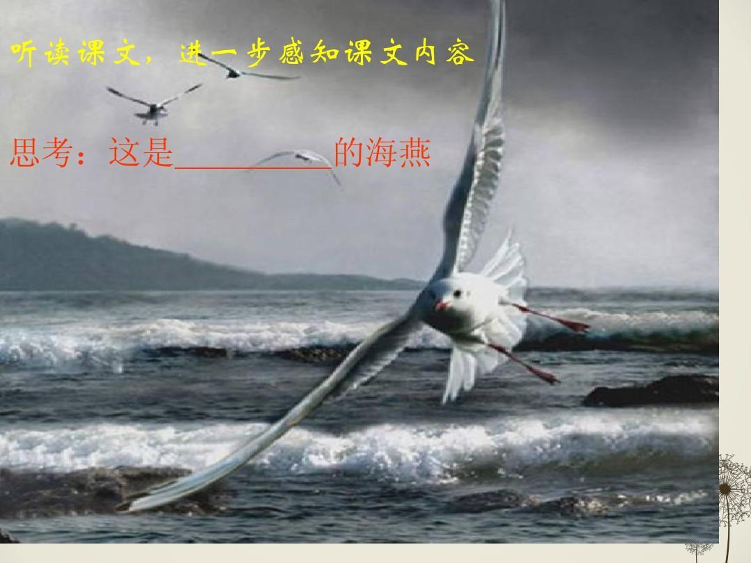 高尔基《海燕》ppt体温泰迪课件多少是正常的图片