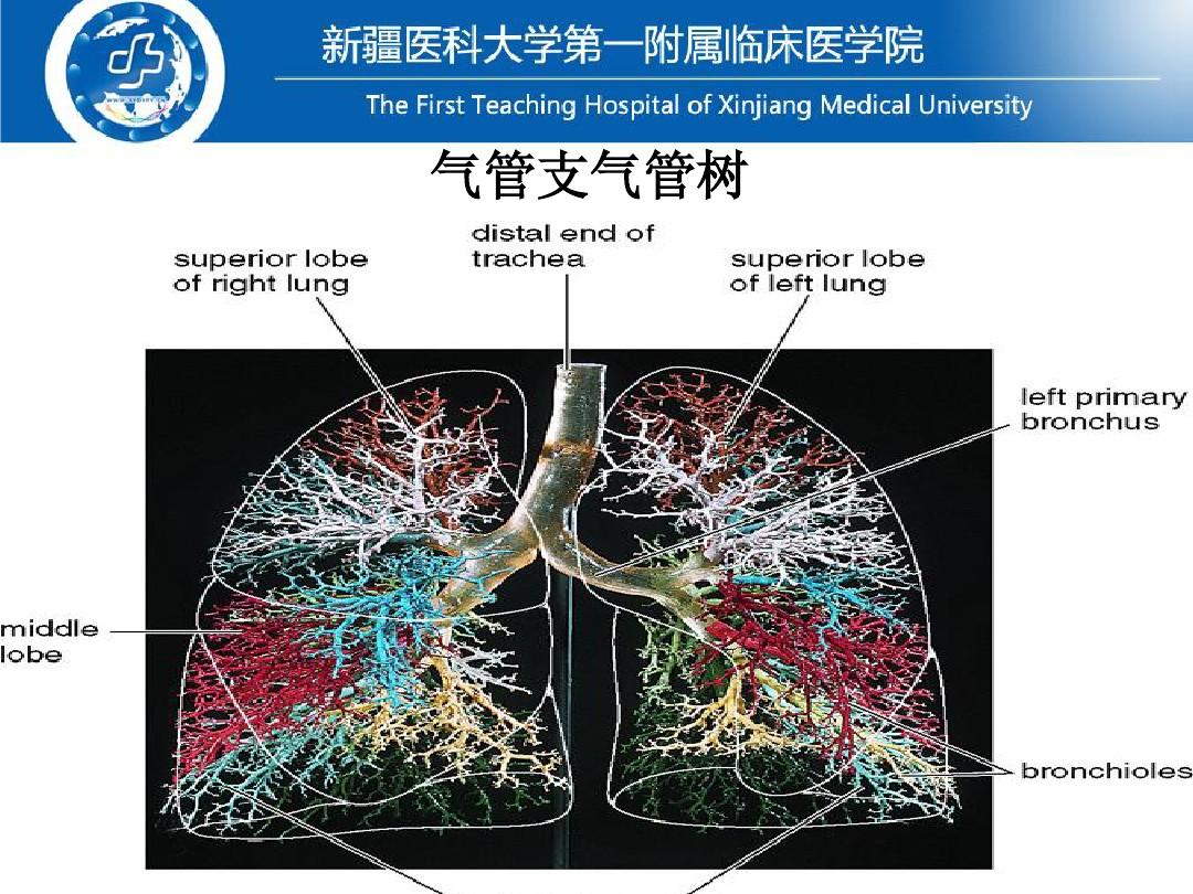 医药卫生基础医学呼吸系统常见疾病常见教案症状病人的护理(本科班)五下册体征人音版年级设计图片
