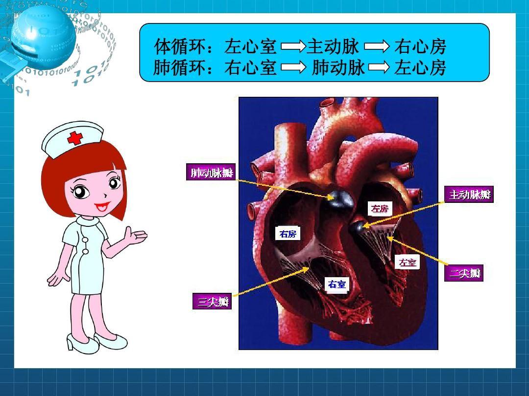 风湿性心脏瓣膜病病人的护理最后版本ppt