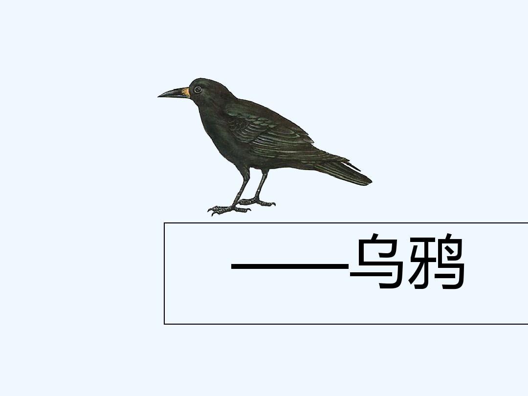 新人教版一年级下册乌鸦喝水(课件)
