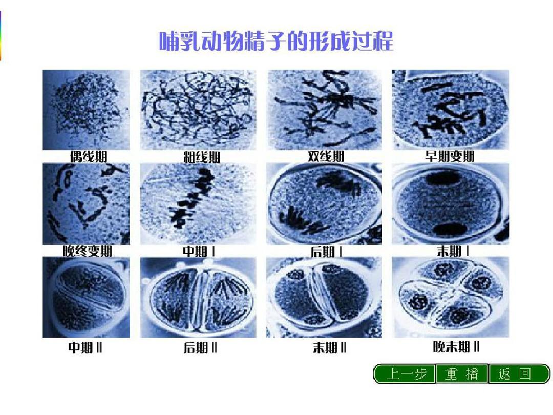 减数形成与有性生殖人教的分裂ppt数学版四单元上细胞年级备课图片