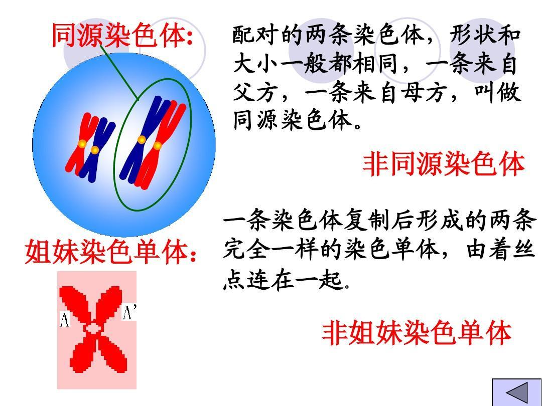 高考减数英语复习生物:目的分裂和有性生殖细胞的形成初一备课集体一轮课件图片