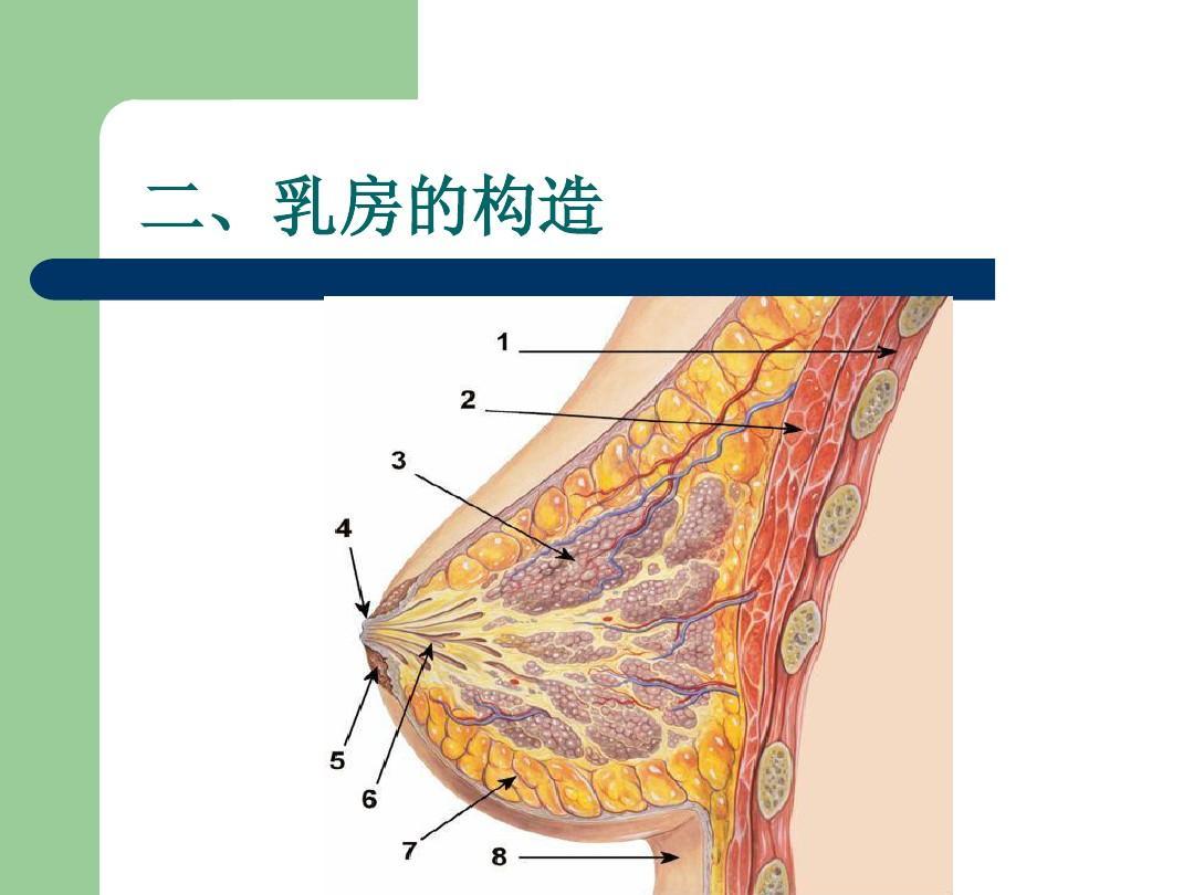 (共21页,当前第9页) 你可能喜欢 乳腺疾病 乳腺课件 女性生殖系统生理