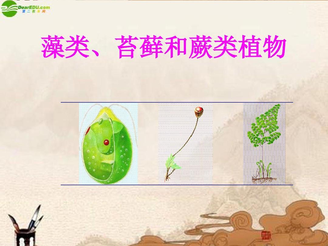 七年级生物上册 藻类 苔藓和蕨类植物精美课件 人教新课标版
