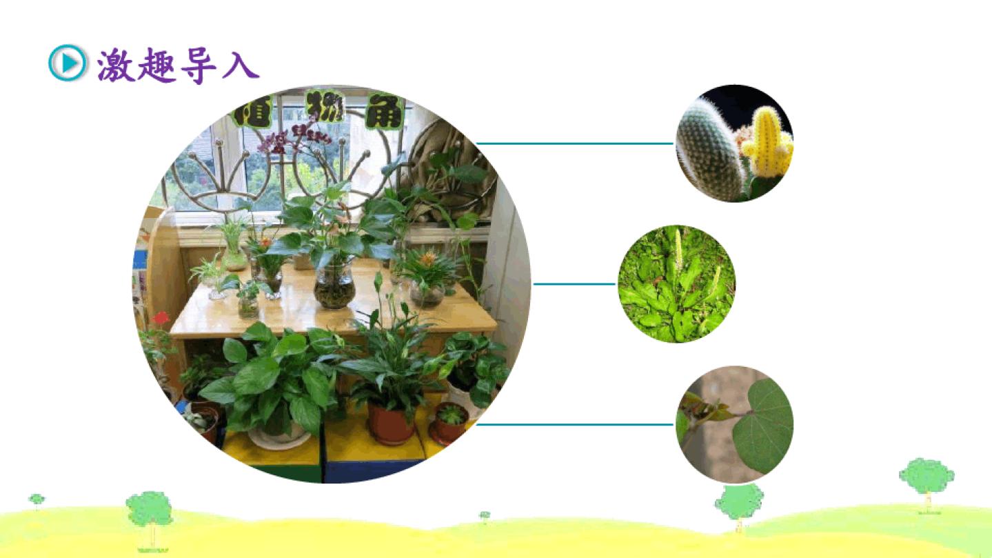 我的植物朋友_部编版三年级下册第一单元习作 我的植物朋友 课件(37